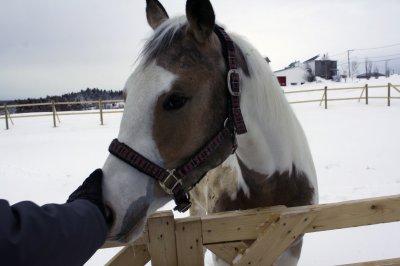 A cheval donné on ne regarde pas les dents...