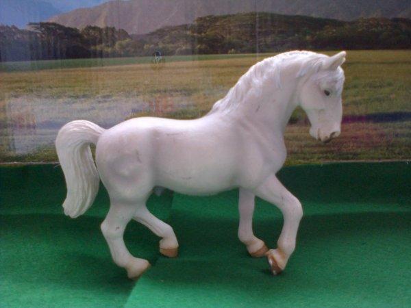 suite des présentations des chevaux