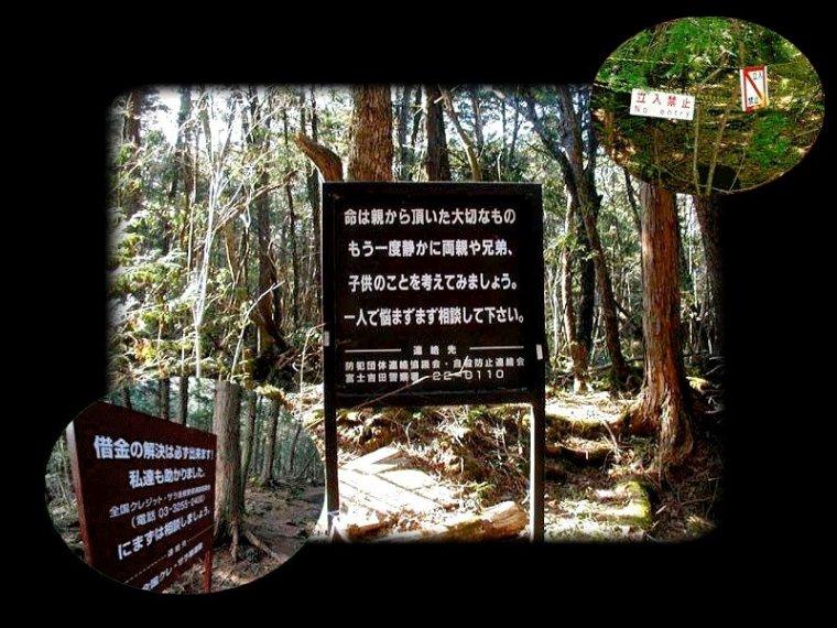 Promenons-nous dans les bois, tant que celle-ci ne nous tuera pas...