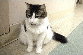 Personnellement, c'est le seul chat que j'aurais peur qu'il vienne me demander des câlins...