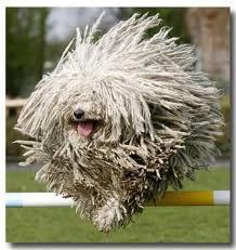 un chien hérisson ki fé du saut a la haie mdr