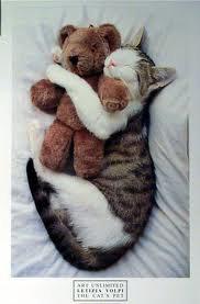 tro mimi le chat ki fé un calin a son doudou