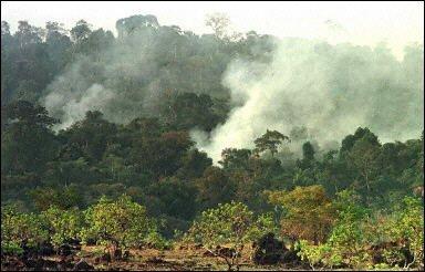 Les menaces pesant sur l'Amazonie