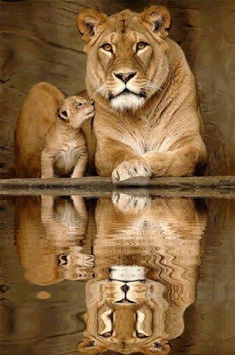 Article photo numéro 1 : Les bébés et leurs parents