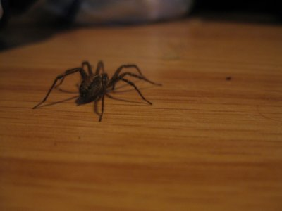 Moi la la ... J'aime pas les araignées ..