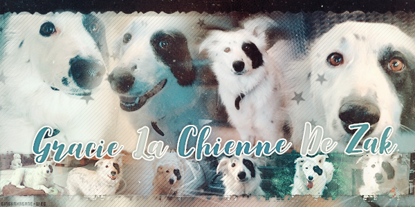 Gracie La Chienne De Zak + Sammy  ♥