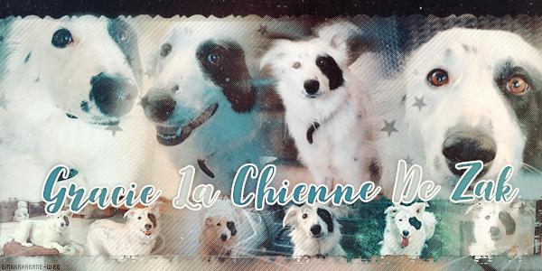 Gracie La Chienne De Zak + Sammy  ♥