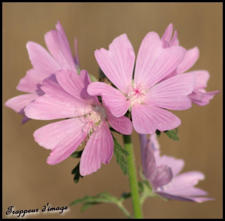 Fleur...