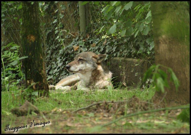 Touroparc zoo...
