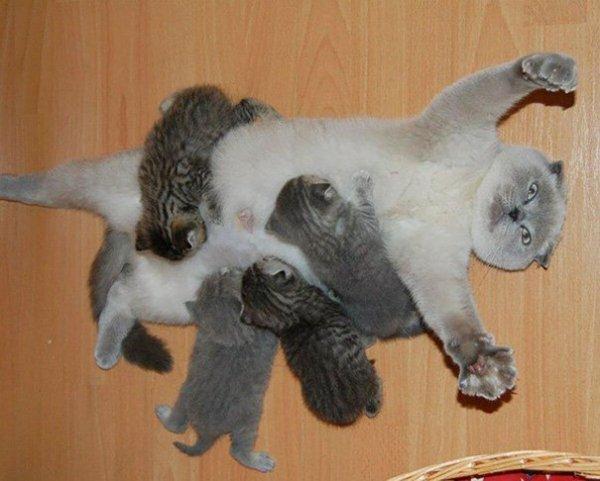 la maman chat