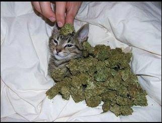le chat ; )