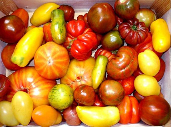 Une incroyable variété de tomates,