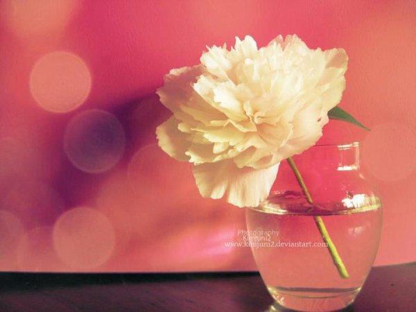 une fleure fané