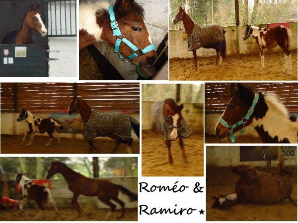 Roméo & Ramiro.. <<