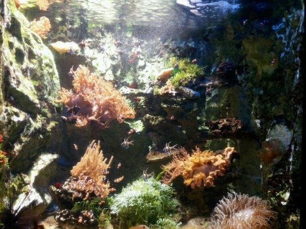 Samedi à st Malo a l'aquarium merci mon chéri ♡