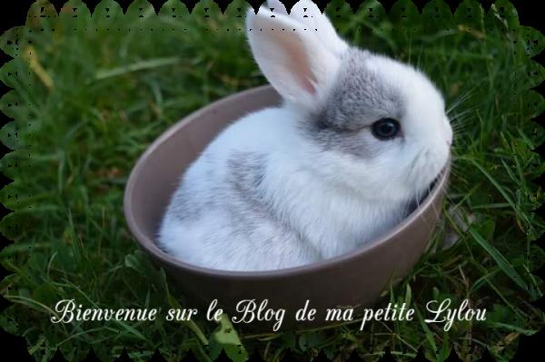 Bienvenue sur le Blog de ma petite Lylou.