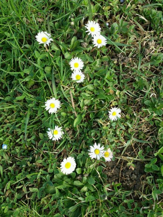 Journée agréable.  Le soleil les fleurs....