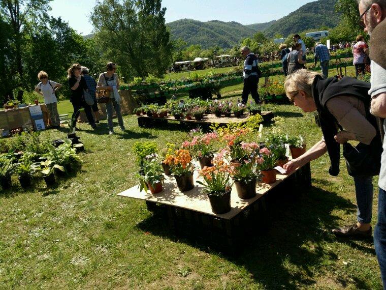 La Roche de Glun . Marché aux fleurs