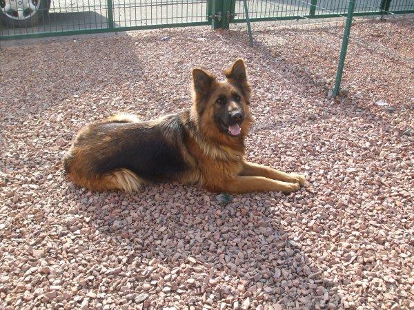 voila ma chienne Elka