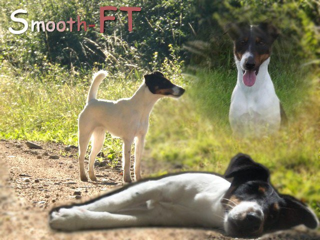 Bienvenue sur le blog source du Fox-Terrier