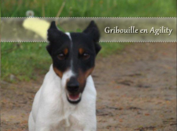 Gribouille en Agility 04/05/13