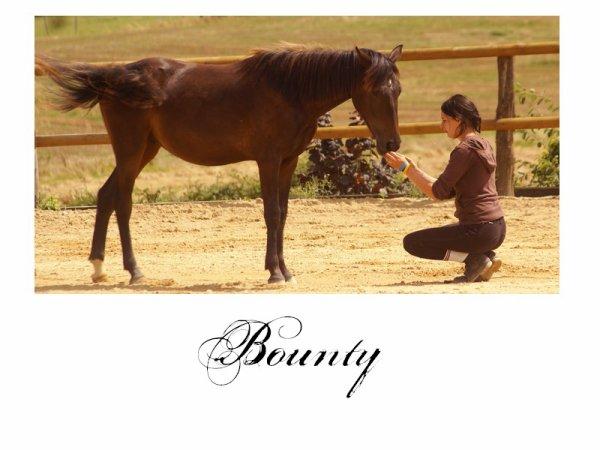 Bounty, un poulain au grand coeur ... ♥