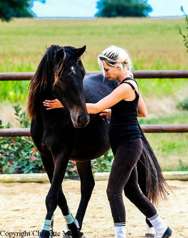 Un cheval ne ce couche pas sans sa confiance total et sont amour. Il ce met en danger pour votre sourire .