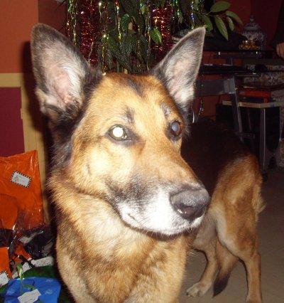 Major, chien adopté