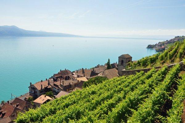Les vins Suisse