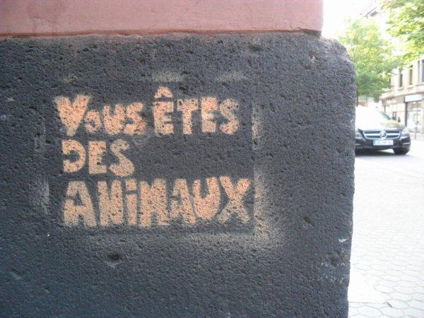 VOUS ÊTES DES ANIMAUX