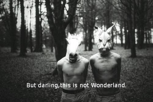 ✖ THIS IS NOT WONDERLAND  ✖
