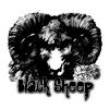 blaack--sheep