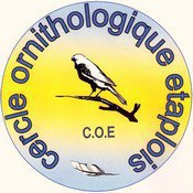 les canaris de posture de Maertens Olivier club COE 6331 et CLUB DE PECQ KF 352