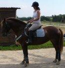 Photo de Xx-Wild-Horse-xX
