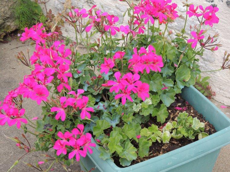 qq fleurs du devant de chez nous
