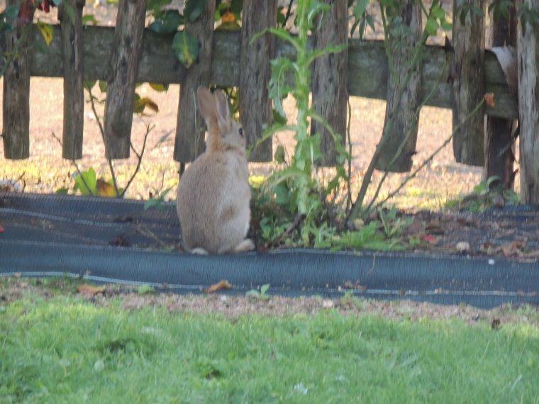 une p'tite viste dans le jardin