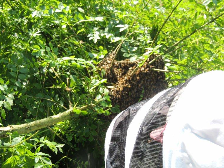 le abeilles et leur periple on voit pas ça tous les jours