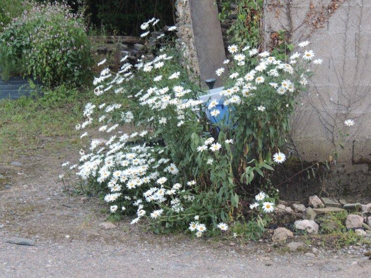 qq fleurs de devant