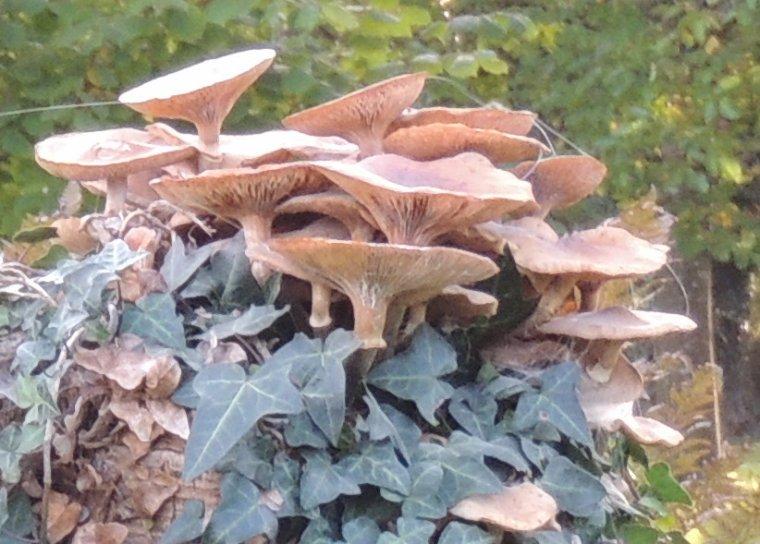 regarde lynda les champignons que tu m as demande de grossir plus pres................