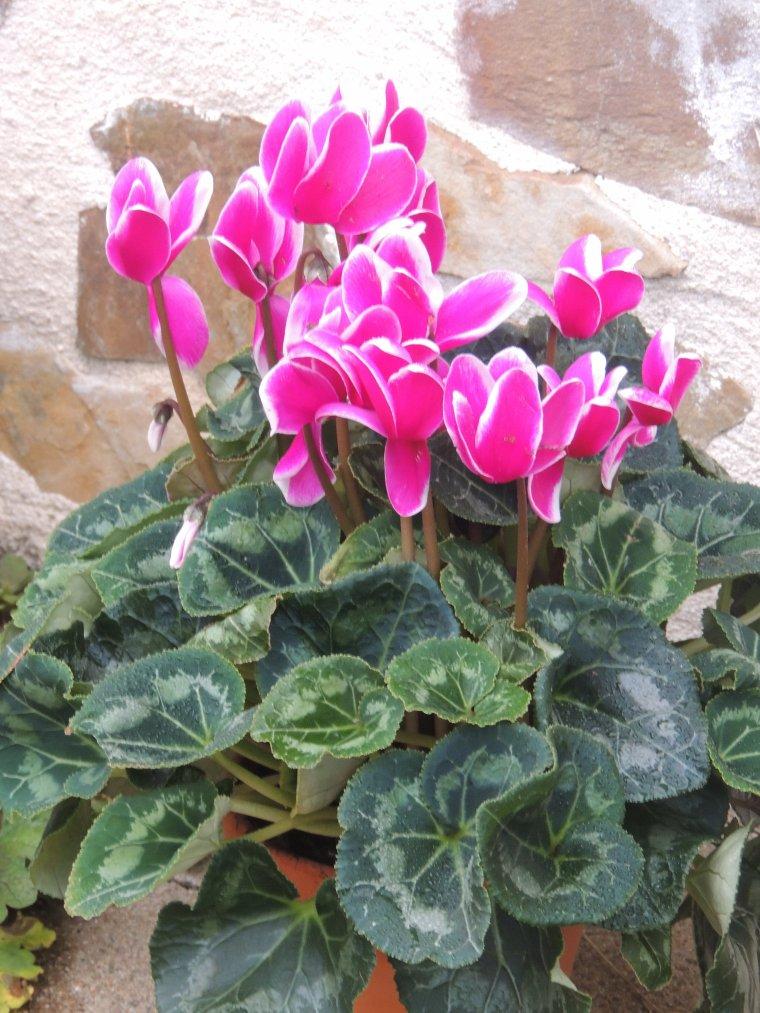 qq fleurs   bonne journée les filles