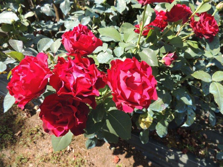qq fleurs pour vous