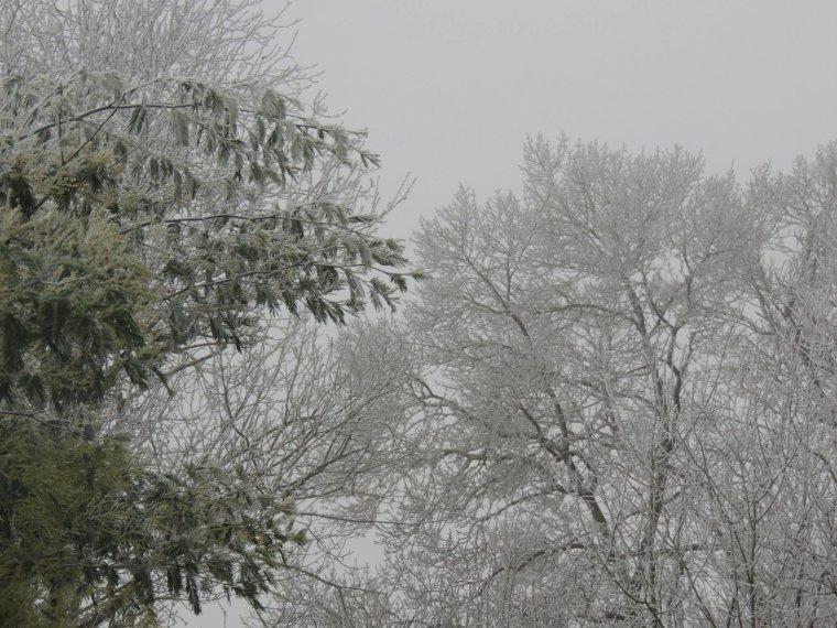 il a neigé hier ça n a pas tenu longtemps mais c etait joli 1heure de jolie neige