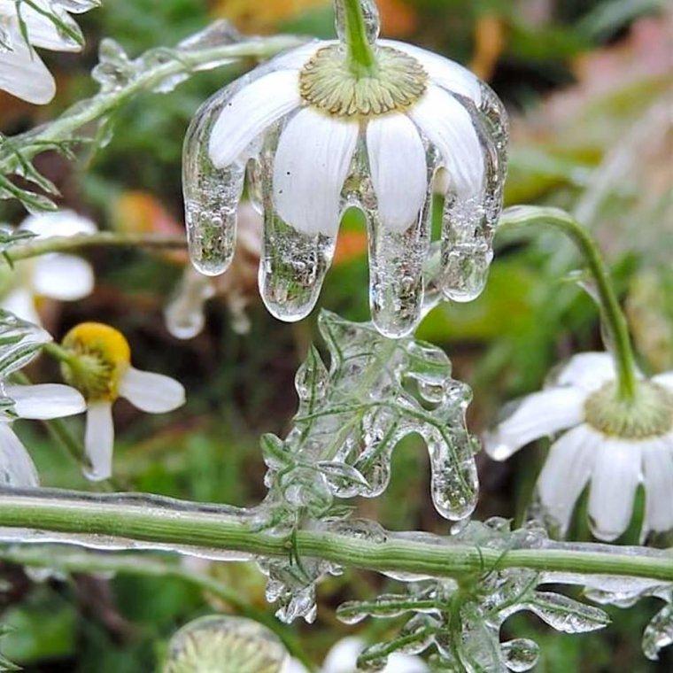 grosse gelée ce matin, -6° bonne journée à tout le monde (image du net)