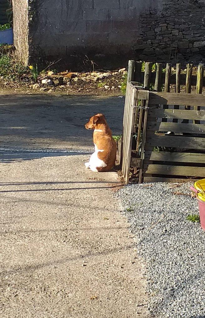 Prune ma chienne attend son maître !! elle l a  pas vu partir et se demande ou il est