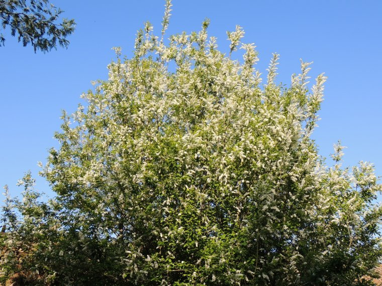 qq fleurs et arbres de chez nous