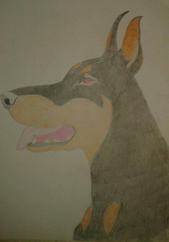 Le chien dessin