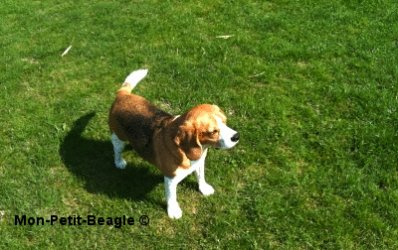 * Welcome to Mon-Petit-Beagle © -