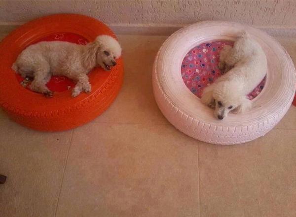 deux magnifique chiens