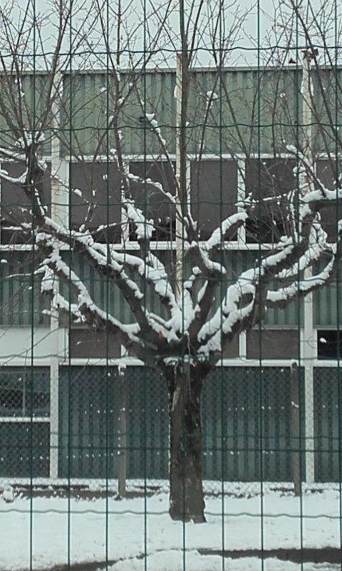 La neige à fait sa grde entrée à roche la Molière Loire 42