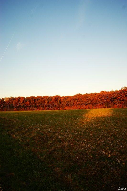 """""""A l'automne des saison ce sont les feuilles qui meurent, a l'automne de la vie, ce sont nos souvenirs"""""""